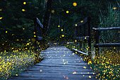 istock Fireflies flying over a wooden bridge 1216993169