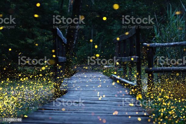 Photo of Fireflies flying over a wooden bridge