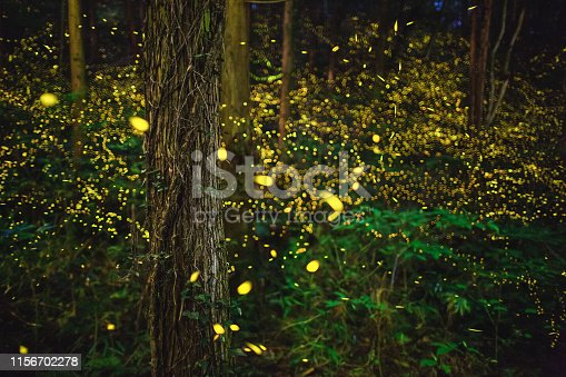 Fireflies glowing above a river in the forest at night