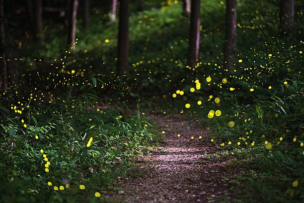 fireflies in a moonlit forest - satoyama scenery stock photos and pictures