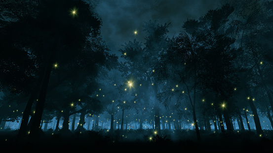 Fireflies in the night forest