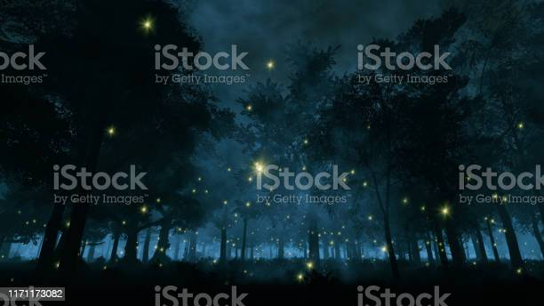 Photo of Fireflies in the night forest