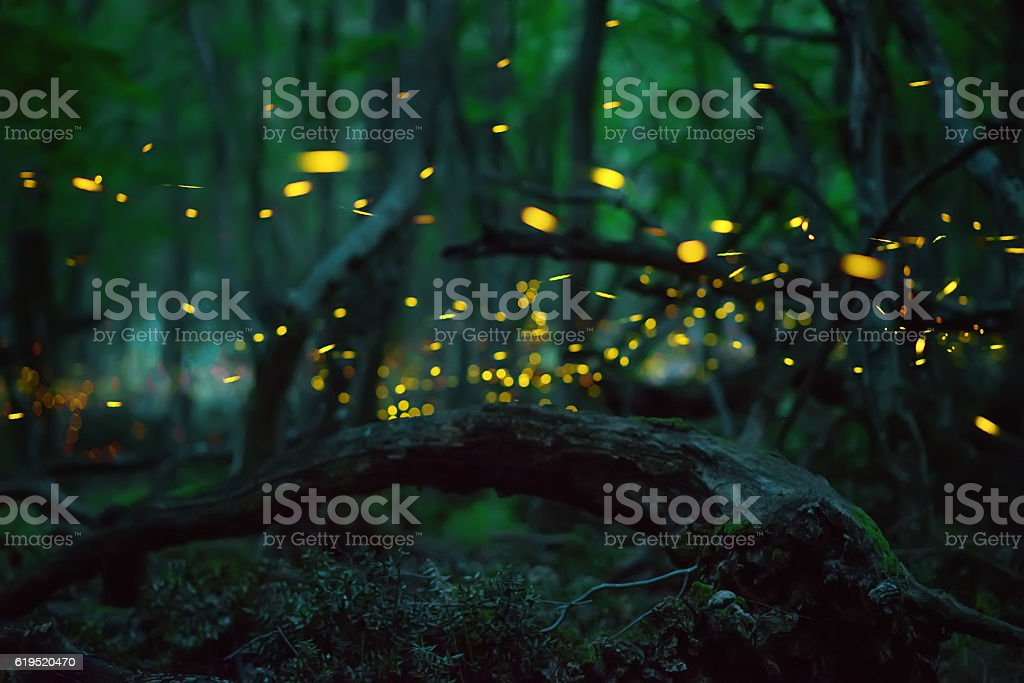 Fireflies in the summer at the fairy forest stock photo
