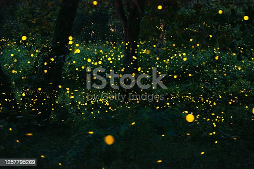 Taking pictures of fireflies at night. Long exposure photo so causing noise and grain film.
