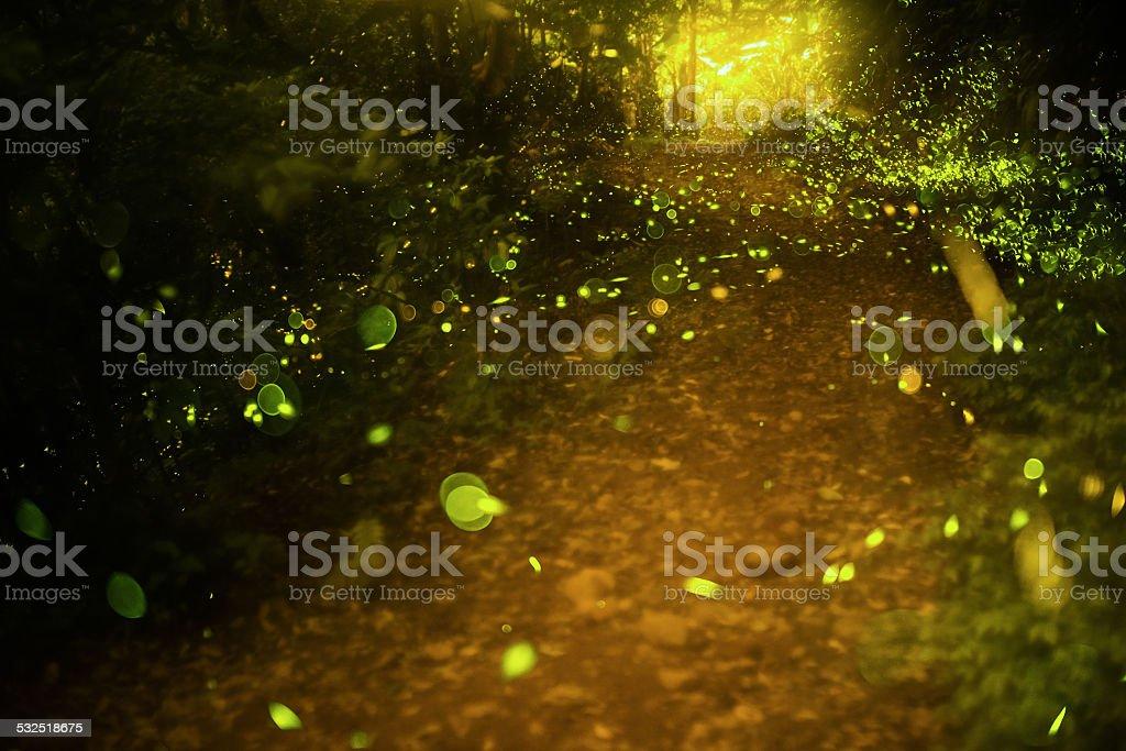 firefly stock photo