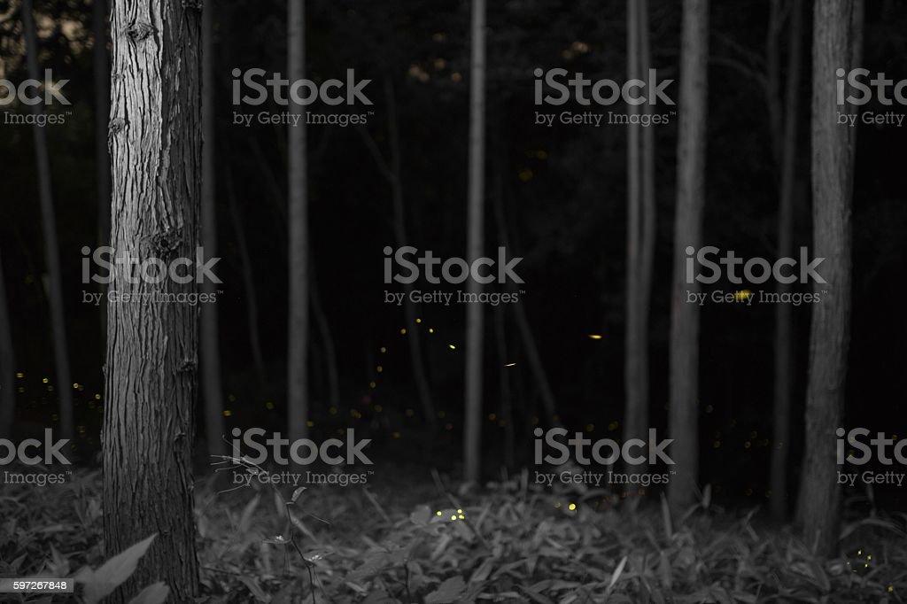 Leuchtkäfer  Lizenzfreies stock-foto