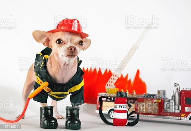 Fireman picture id157485011?b=1&k=6&m=157485011&s=612x612&h=7aypghqfszyk2idit5 hp76z 04xfch0qabuejvtzje=