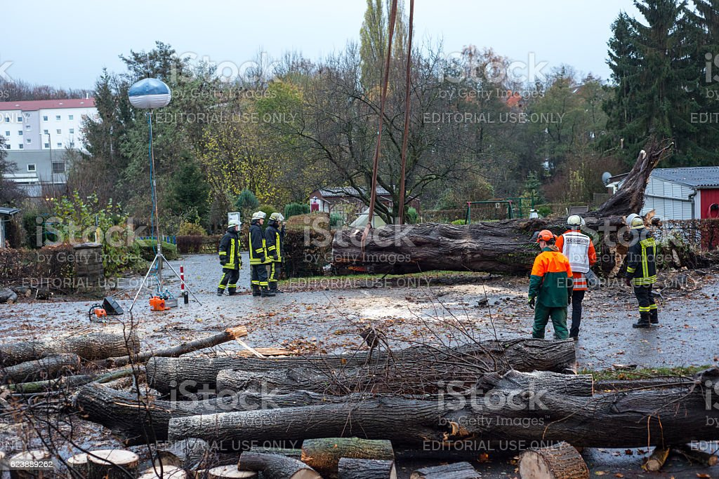 Fireman squad cuts a tree felled in the street stock photo
