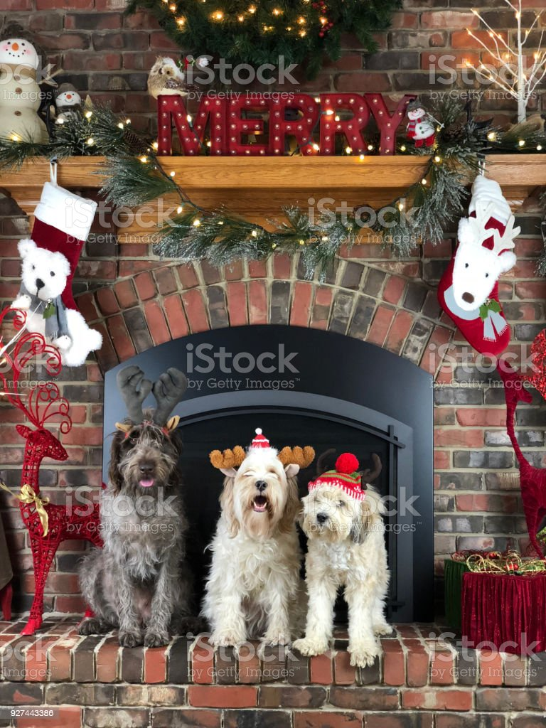 Fireplace dogs stock photo
