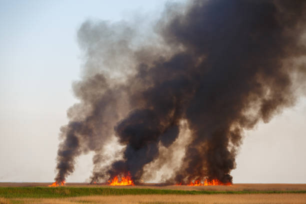 Fires destroy the dried up fields of the old cane in the quiet summer weather stock photo