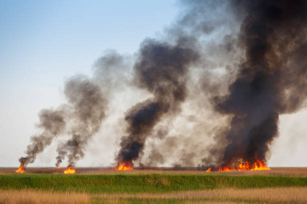 Fires destroy the dried up fields of the old cane stock photo