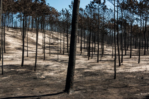 Fires in Portugal stock photo