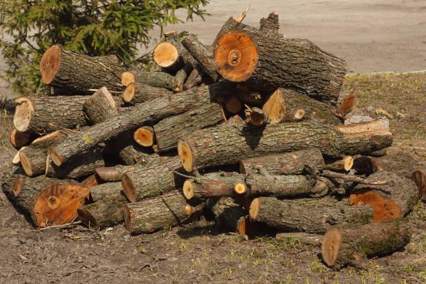 brennholz aus den gesägten kiefern liegt auf dem boden - dunkle flecken entferner stock-fotos und bilder