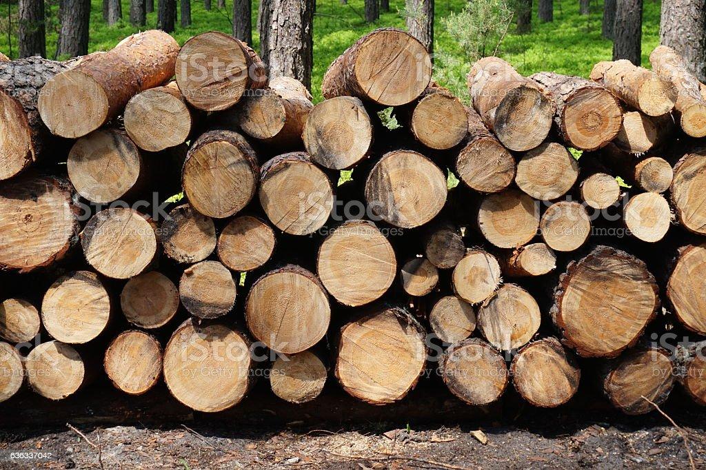 Brennholz im Wald – Foto