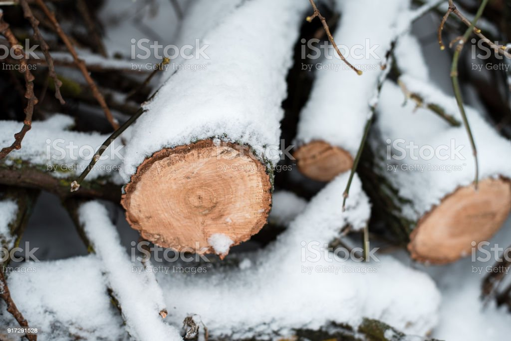 Firewood in woods covered with snow. In winter, a close-up of sawed trees. stock photo