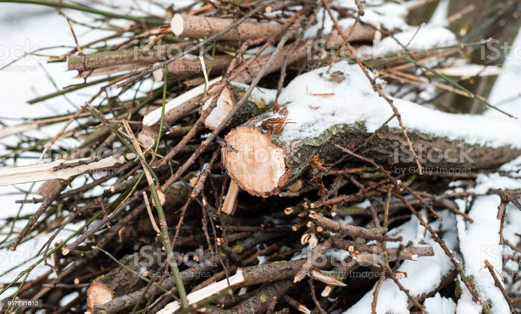 Firewood in woods covered with snow. In winter, a close-up of sawed trees. The logs collected for the fire. stock photo