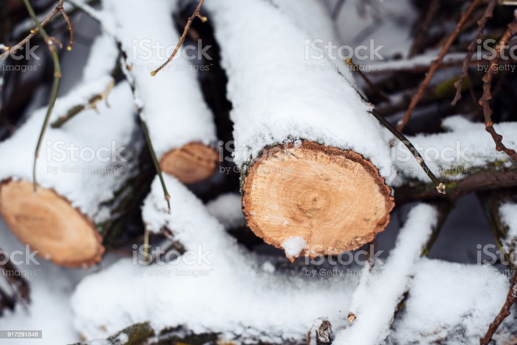 Firewood in woods covered with snow. In winter, close-up of sawed trees. stock photo