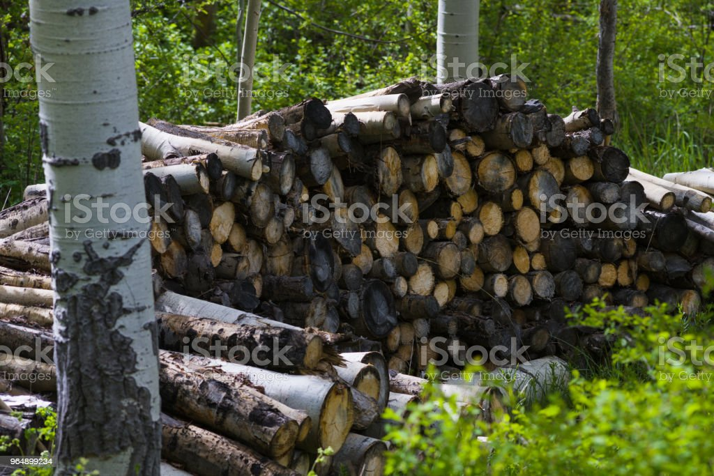 Firewood Pile Stack in Aspen Tree Forest royalty-free stock photo