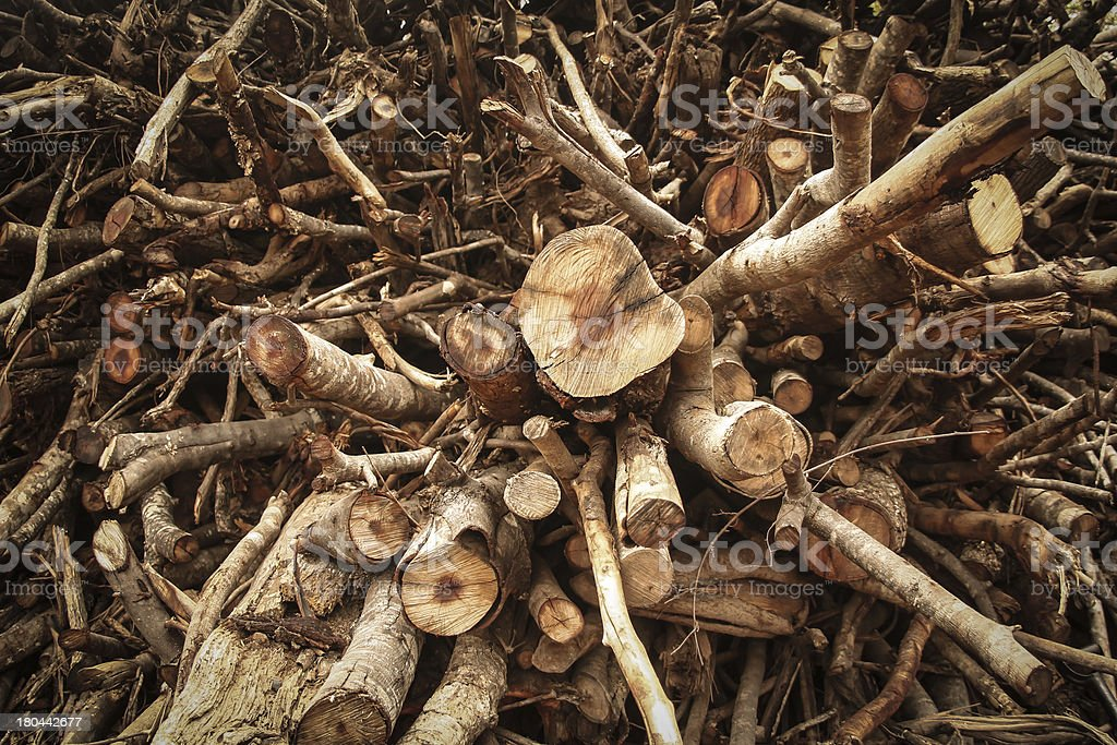 firewood Stacked stock photo