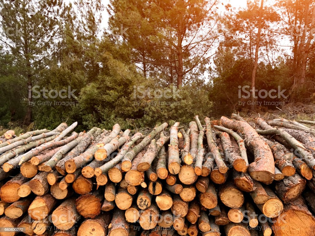 Firewoods in forest stock photo