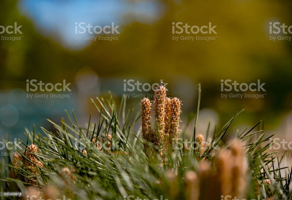 Fir-needle tree branches composition stock photo