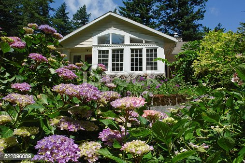 Firs and Hydrangea Garden Frame A Northwest Home in the Portland, Oregon Metropolitan area/