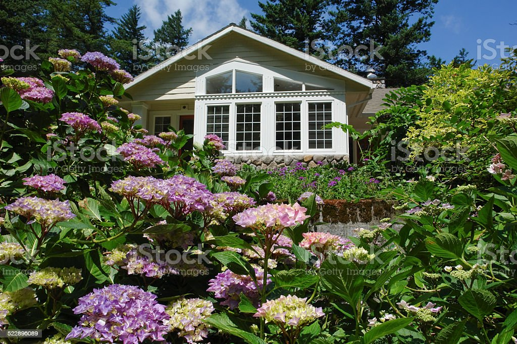 Firs and Hydrangea Garden Frame A Northwest Home stock photo