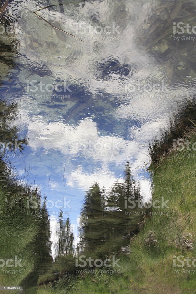 Firs and sky reflected stock photo