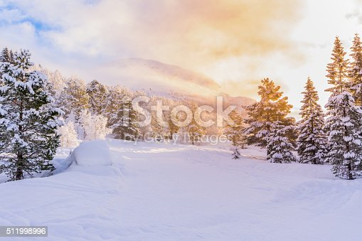istock firs with sunrise, winter 511998996