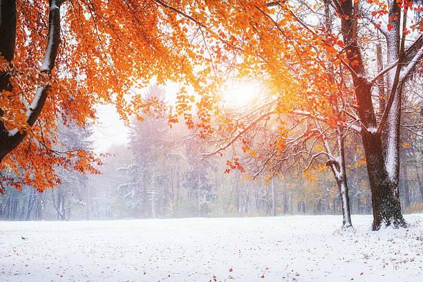 ersten tage des winter - laub winter stock-fotos und bilder