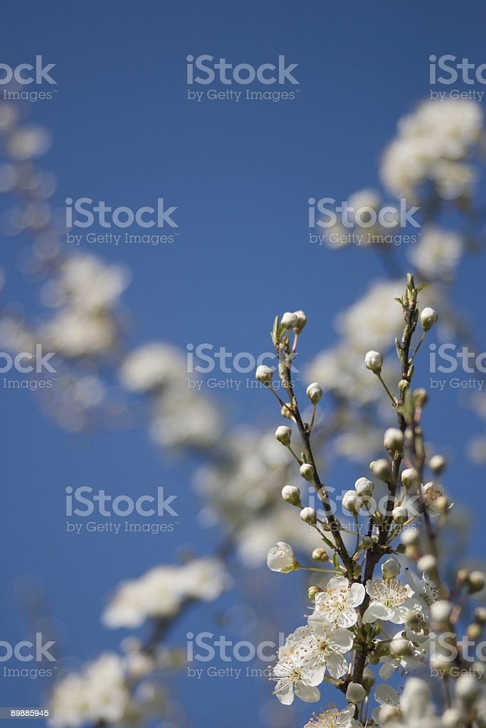 first flowers in spring royalty-free stock photo