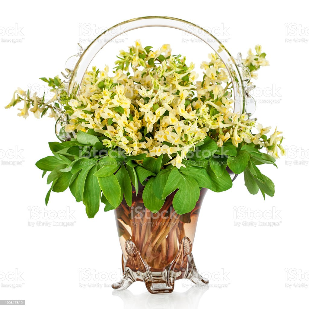 First Forest Springs Flowers In Vase Stock Photo More Pictures Of