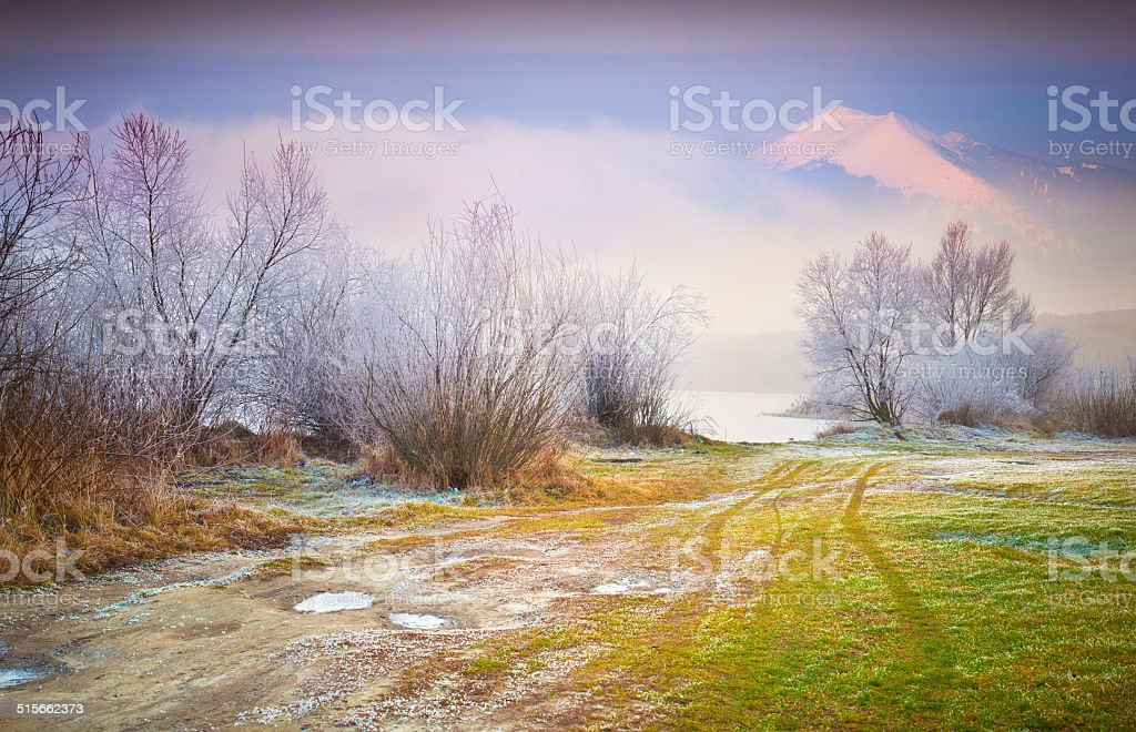 First frost in the forest. stock photo