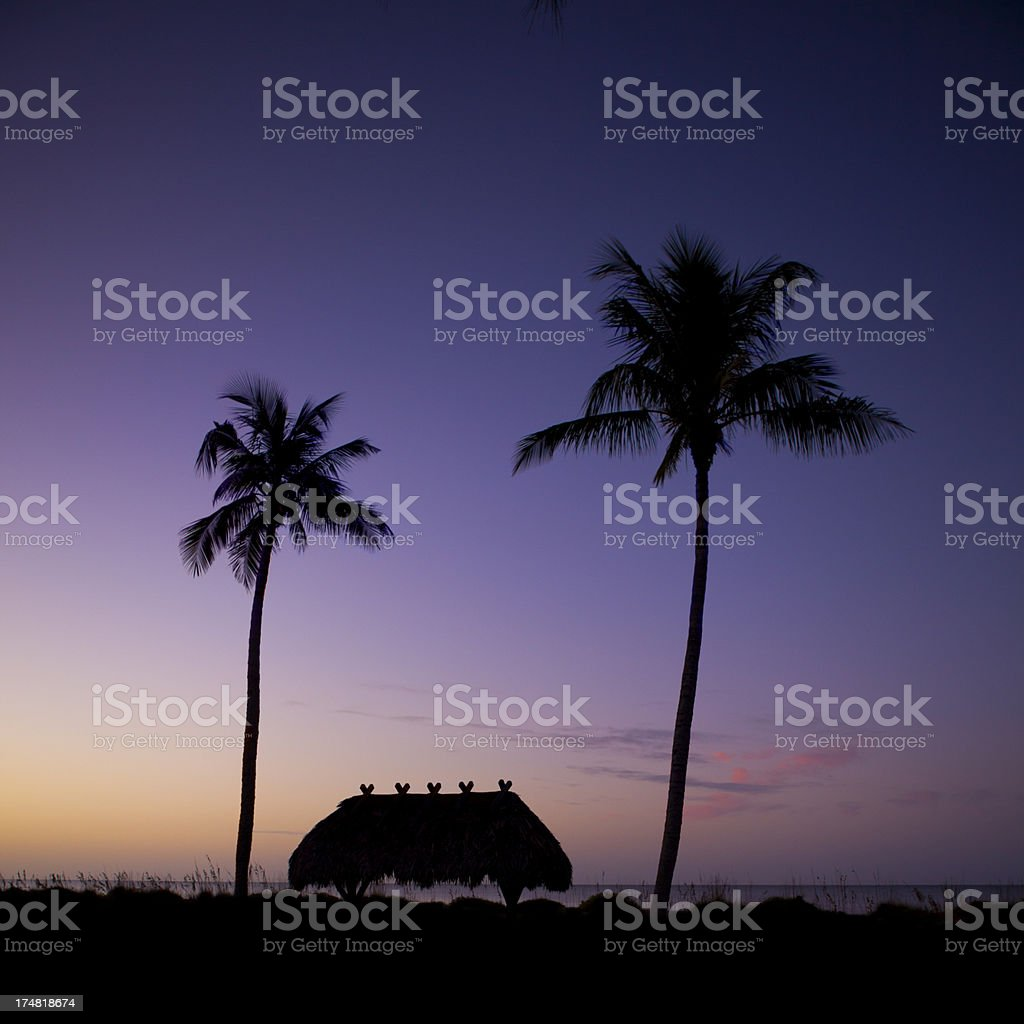 First glimpse of dawn with palm trees royalty-free stock photo