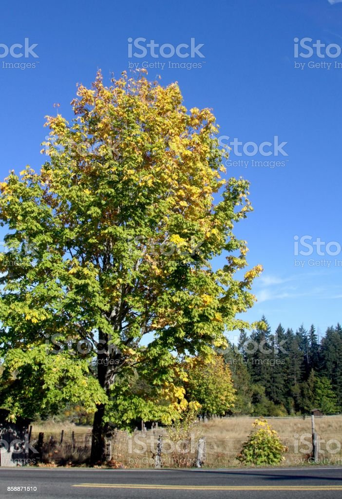 First Hint Of Fall stock photo