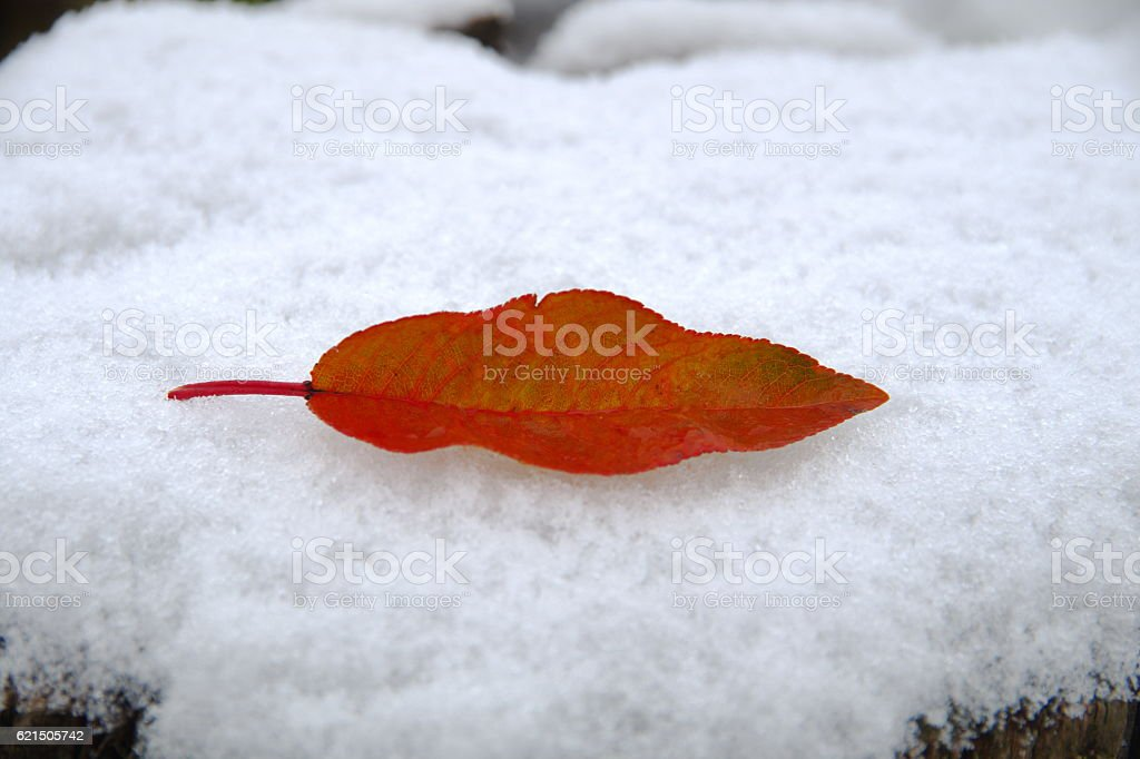 First kiss, first snow. Lizenzfreies stock-foto