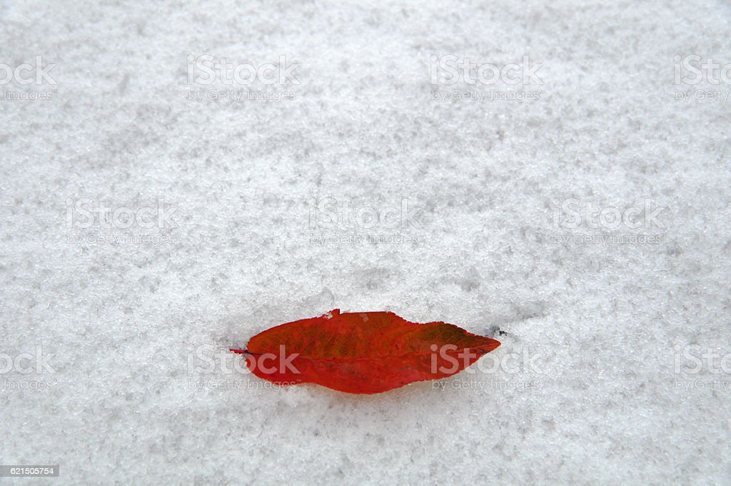 First kiss, first snow. foto stock royalty-free