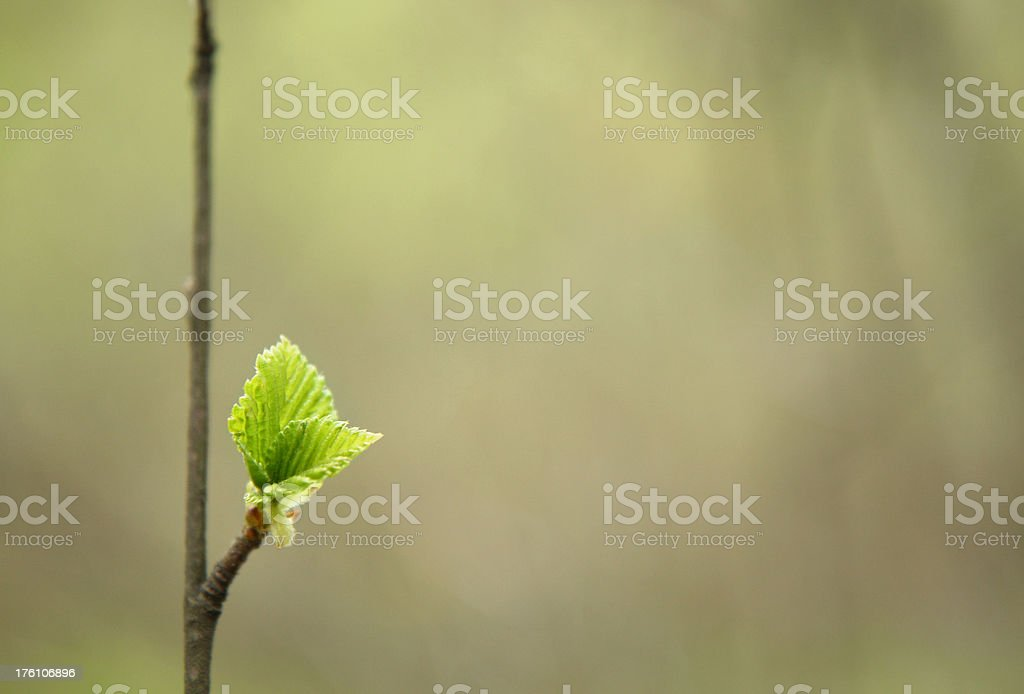 first leaves royalty-free stock photo
