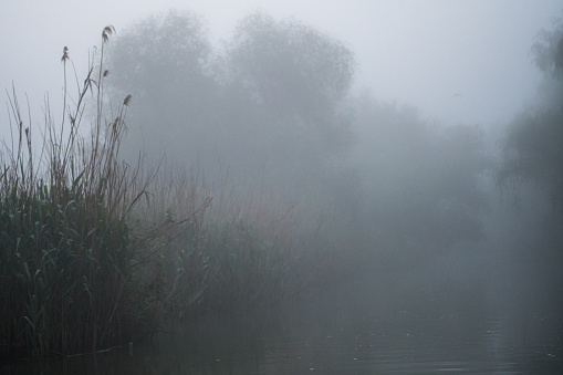 First light of a misty and foggy morning creating a picturesque atmosphere at the Danube Delta Romania