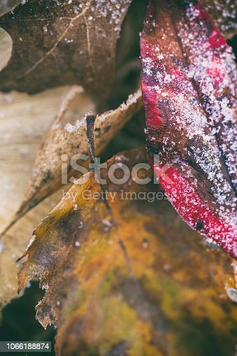 istock First Morning Frost Fall Leaves Background Copy Space 1066188874