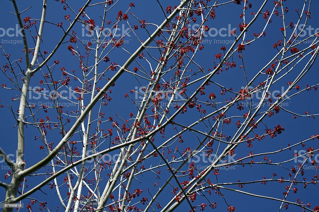 first red blossoms of spring in march royalty free stockfoto