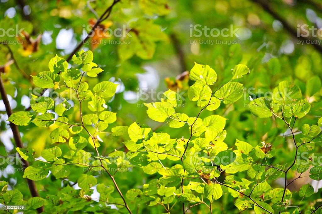 First sign of autumn stock photo