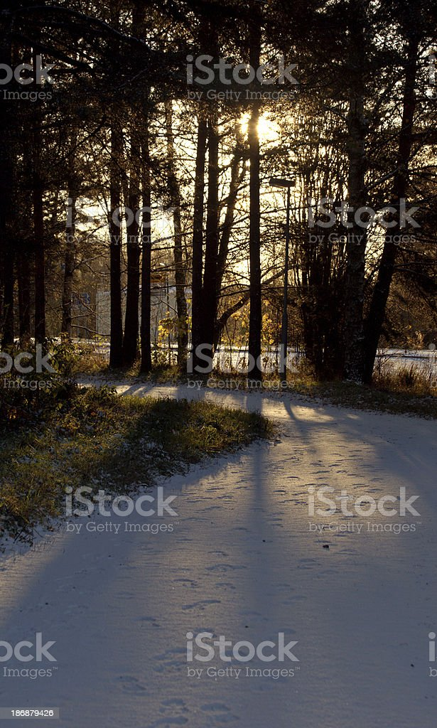 First snow in a sunny morning stock photo