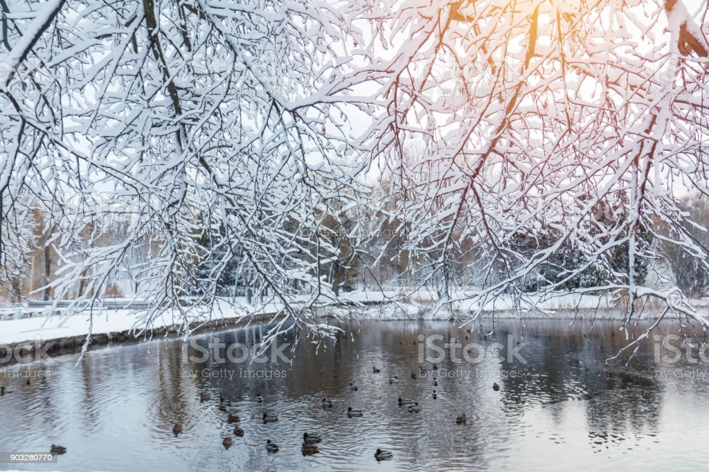 First snow in the city park with ducks on an icy pond and a bench covered with snow.  Sunny day in the winter city park. stock photo