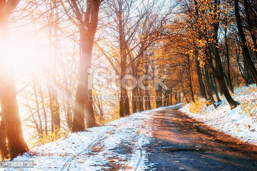 First Snow in the Woods in lisi.Doroha