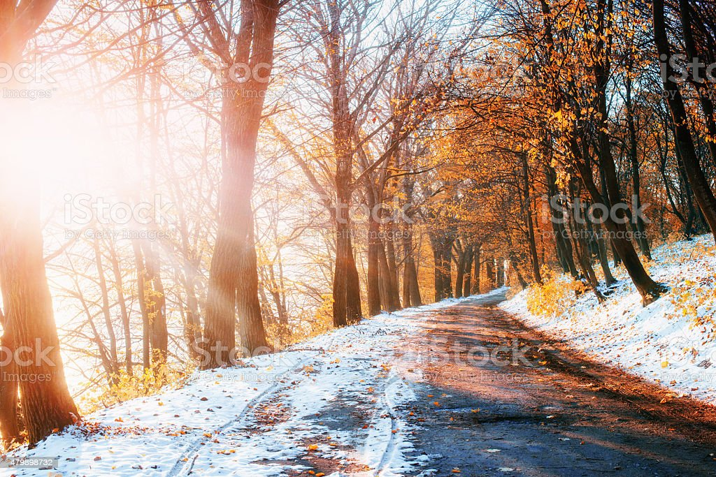 First Snow in the Woods in lisi.Doroha stock photo