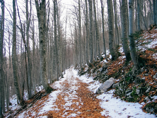 First Snow in the Woods stock photo