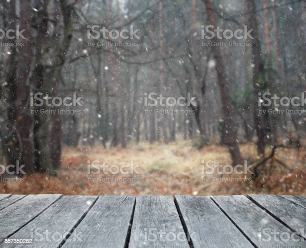 Photo of First snow in winter forest from patio