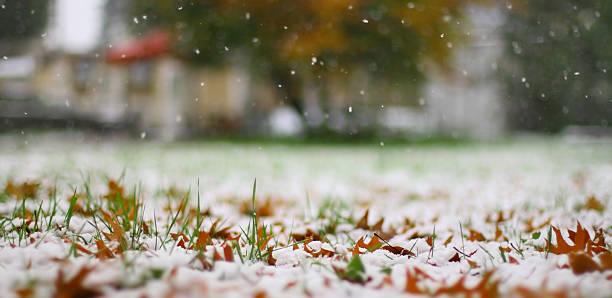 erste schnee - laub winter stock-fotos und bilder