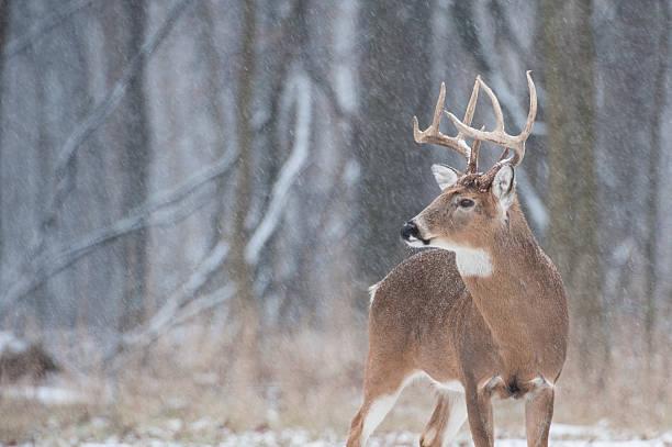 Première neige - Photo